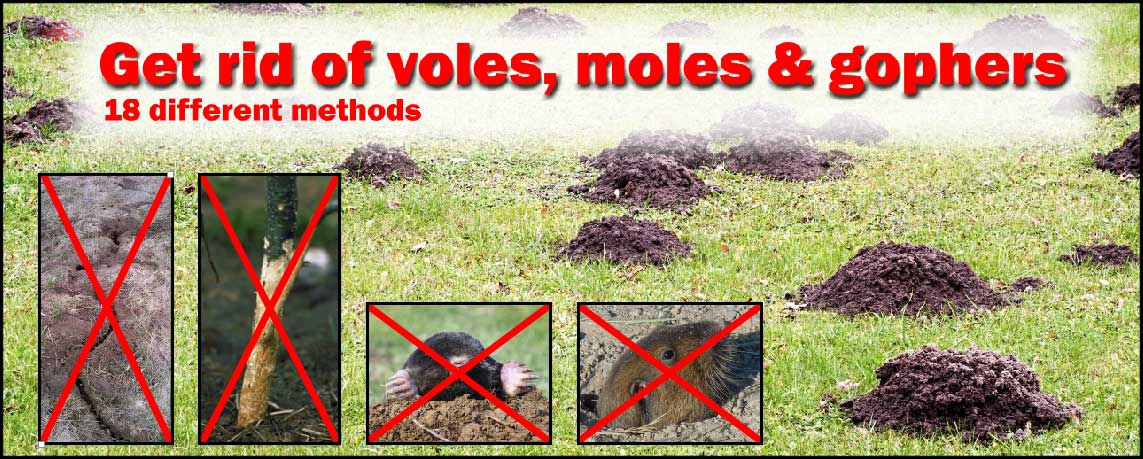 How To Get Rid Of Voles Moles Gophers